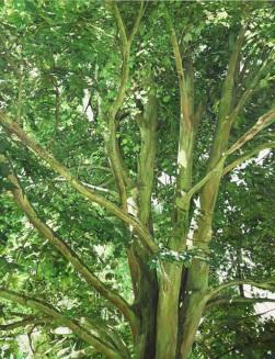 건강한 나무, A tree, oil on linen, 145 x 112, 2010-2012
