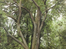 길가의 나무들 2_Looking up on a road 2, 린넨에 유화_oil on linen, 97x130cm, 2014