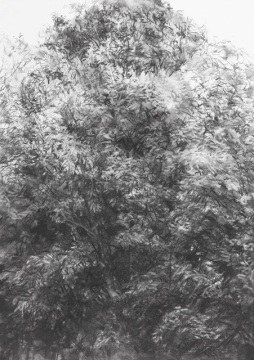 나무_Woods, 종이에 목탄_charcoal on paper, 70x50cm, 2014