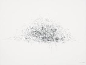 수풀_Folliage, 종이에 연필_pencil on paper, 48x63cm, 2014