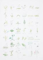잡초호신술비전-초식42_lithography & watercolors_100x75cm_2013